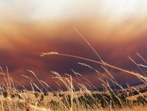 Fire clouds. On the horizon herald the impending bushfire Stock Photo
