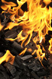 Fire with coal Stock Photo