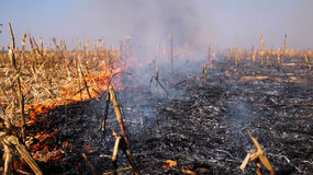 Fire in the Cornfield After Harvest. Fire burning on the dried cornfield Stock Photos