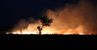 Fire in the crop fields making huge cloud of smoke causing air pollution and global warming royalty free stock photos