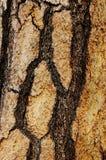 Fire Damaged Pine Royalty Free Stock Image