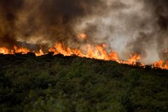 Fire & Deforestation Stock Image