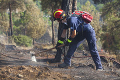 Fire Department Extinguishes a forest fire Royalty Free Stock Photography