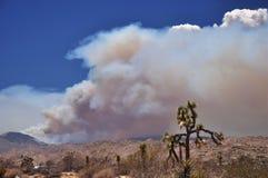 Fire in the desert Stock Photos