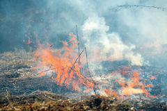 Fire destroys everything. Dry grass burning in the early spring Stock Image