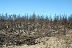 Fire Devastation. Devastation caused by British Columbia Canada forest fires Stock Image