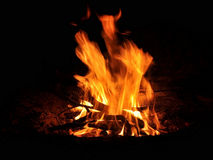 Fire devil. In flames of camp fire Stock Photos