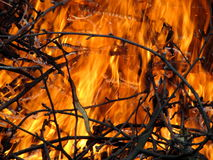 Fire devouring twigs Royalty Free Stock Image