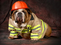 Fire dog Stock Image