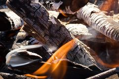 Fire in a dry forest Royalty Free Stock Photos