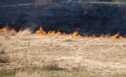 Fire on dry grass. In the field inflated by a strong wind Stock Photos