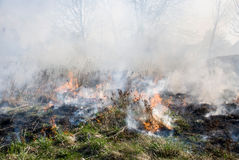 Fire on dry grass Royalty Free Stock Photography