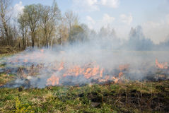 Fire on dry grass. Fire, burning grass to the spring Royalty Free Stock Photo