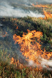 Fire in the dry grass field Royalty Free Stock Photos
