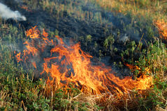 Fire in the dry grass field Stock Images