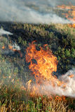 Fire in the dry grass field Stock Image