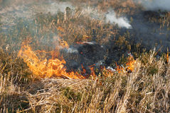 Fire in the dry grass field Royalty Free Stock Photo
