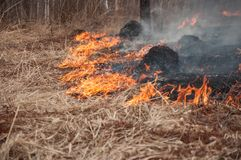 Fire on the dry grass. Forest pazhar. royalty free stock photography