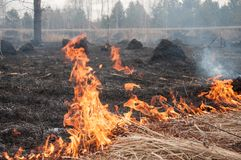 Fire on the dry grass. Forest pazhar. royalty free stock photos