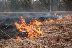 Fire on the dry grass. Forest pazhar. stock photo