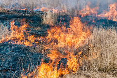 Fire in dry grass Stock Photography