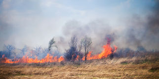 Fire on dry grass and trees Royalty Free Stock Images