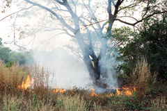 Fire on dry grass and trees Royalty Free Stock Photo