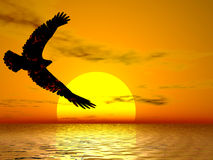 Fire Eagle Sunrise. Fire eagle soaring in a brilliant sun Stock Photos