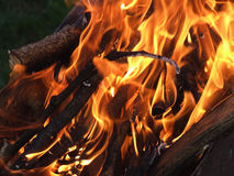 Fire And Ember. Burning fire wood and ember Stock Photo