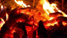 Fire and crickets. Night fire and crickets singing stock video