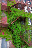 Fire Escape Covered With Vines Stock Images