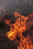 Fire on the field. An image of fire is in the field Stock Photo