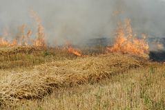 Fire in the field Royalty Free Stock Photos