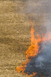 Fire on a field Stock Photography