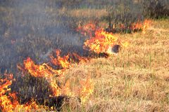 Fire on the field, Burn fields to prepare the soil. For planting Stock Images