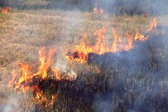 Fire on the field, Burn fields to prepare the soil. For planting Royalty Free Stock Photography
