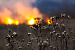 Fire in the field Royalty Free Stock Images