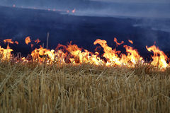 Fire on the field Royalty Free Stock Image