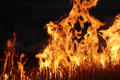 Fire on the field Stock Photos