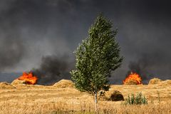 Fire in the field. Burning straw bales on a farmer's field Royalty Free Stock Photo