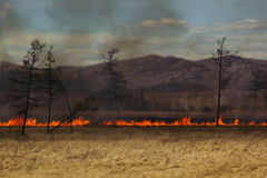 The fire in the field. Fire line. Disaster. Stock Images