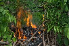 Fire. Field on forest fire burning Stock Images