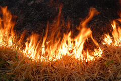 Fire in a field Stock Images