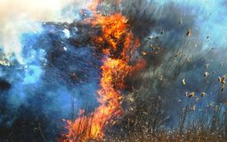 Fire on the field, a strong flame from the burning of grass for a better growth of new vegetation. A strong flame from the burning of grass for a better growth Royalty Free Stock Images