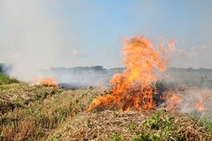 Fire in field Stock Photography