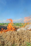 Fire in field Royalty Free Stock Photo