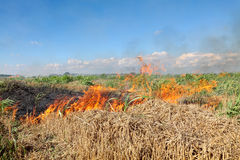 Fire in field Royalty Free Stock Photos