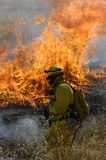 Fire fighter and flames. In a dry grassy field Royalty Free Stock Photo