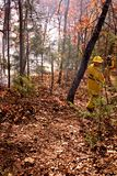 Fire fighting. Fire fighters fighting bush fire Royalty Free Stock Images
