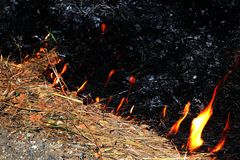 Fire, Fire burning hay Selective focus stock photography